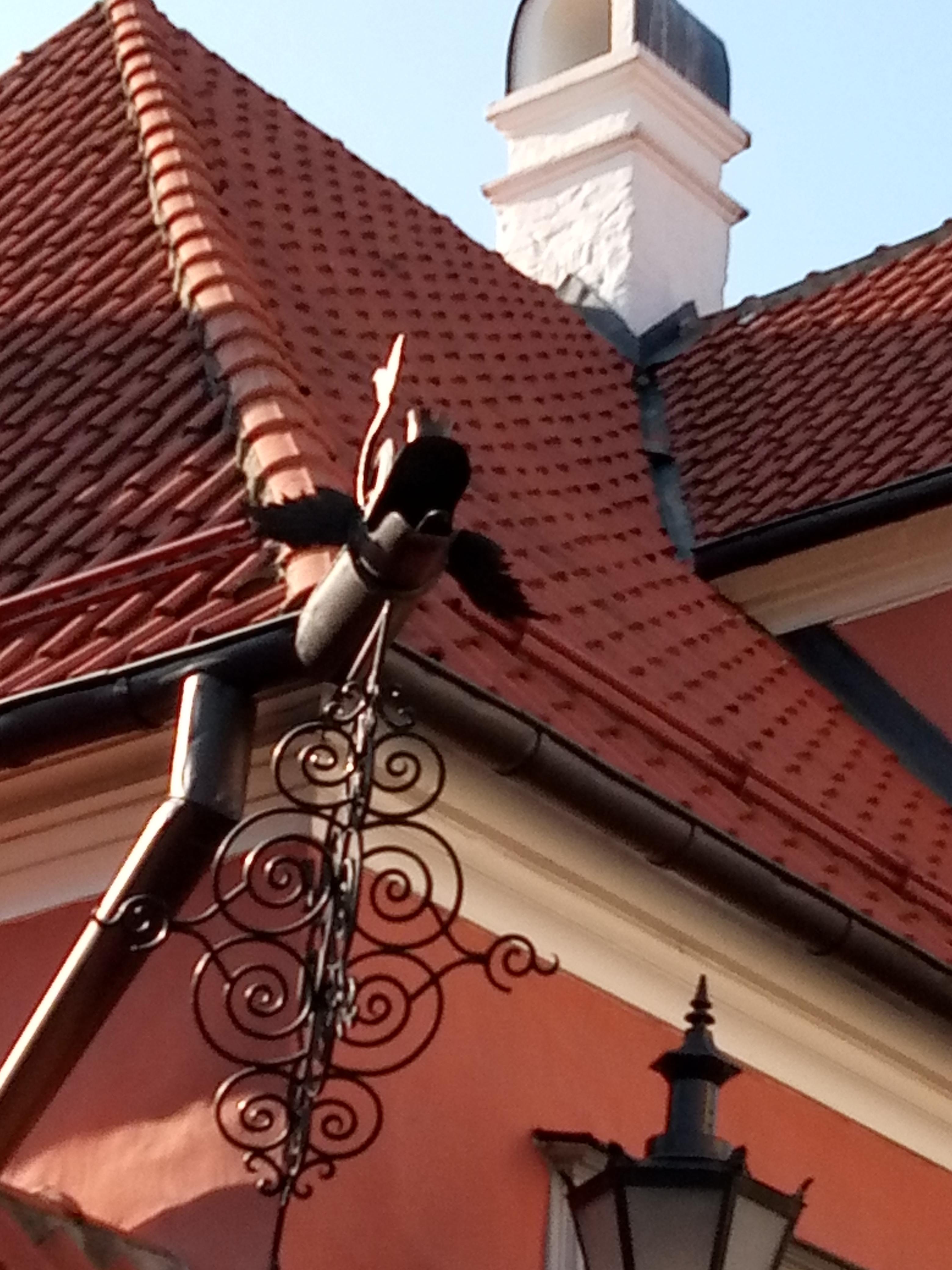 Орден организовал экскурсию по Старому Таллину